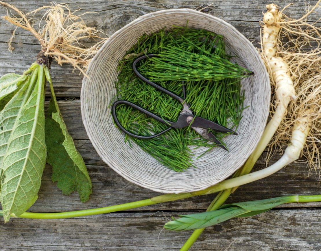 5 Herbs To Support A Body in Pain | Herbal Academy | Herbalist Maria Noël Groves teaches about herbs for pain and how they can come to our assistance during times of need.