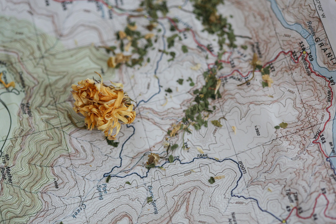 Herbal Travel Essentials For The Adventurous Traveler | Herbal Academy | If you're planning on some adventurous travel in the near future, this herbal travel essentials guide will help you find the herbs and preparations to take with you.