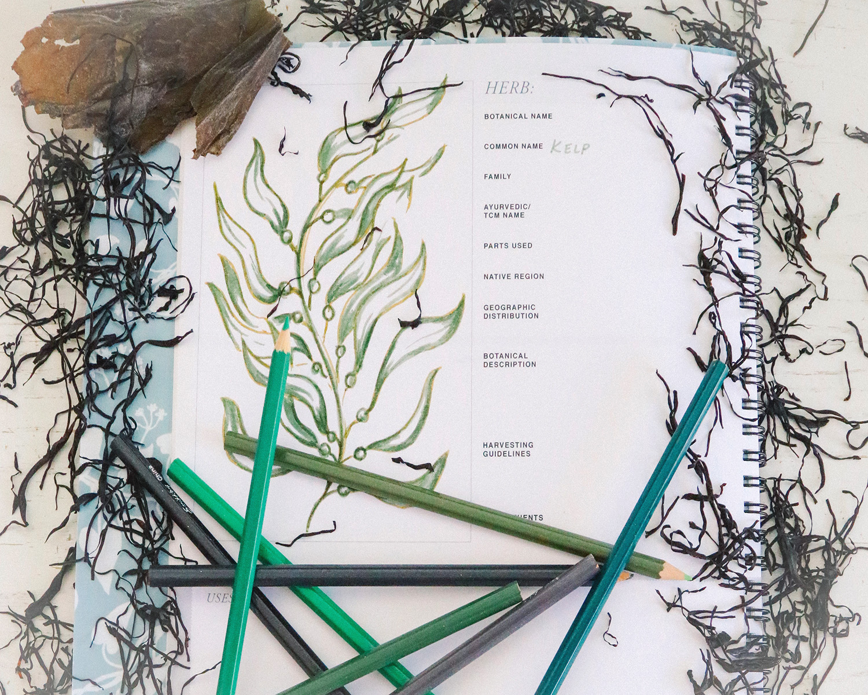 herb notebook with dried seaweed