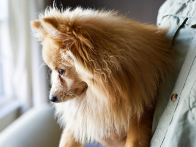 Herbal Support for Canine Rabies Vaccination | Herbal Academy | Learn how you can look to nature to help support your pet's body before and after the canine rabies vaccination with the aid of herbs.