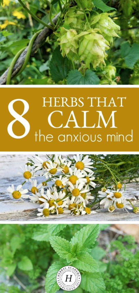 8 Herbs That Calm The Anxious Mind | Herbal Academy | Looking for some herbal support for your mind? If so, here are eight herbs you need to know about that help to calm the anxious mind.