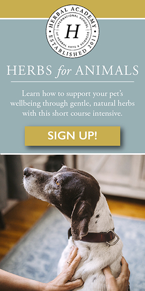 Discover the herbal holistic approach for animals!