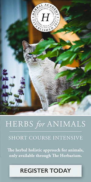 Support your pet's wellbeing with herbs, only through The Herbarium
