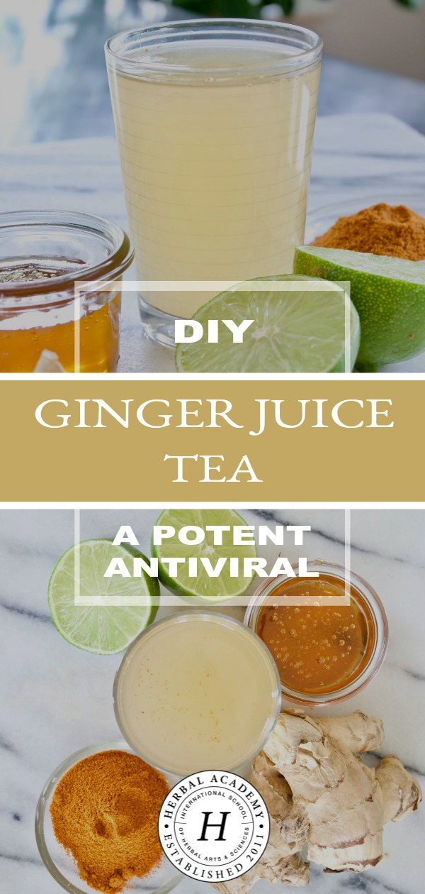 DIY Ginger Juice Tea: A Potent Antiviral | Herbal Academy | Learn how ginger can have a very potent antiviral effect on the body when used at the first sign of a viral illness in this DIY ginger juice tea!