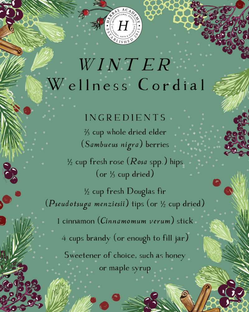 3 Conifer Cordial Recipes for Winter Wellness | Herbal Academy | Learn about three different types of conifer trees and their wellness benefits, as well as how to use them in three conifer cordial recipes!