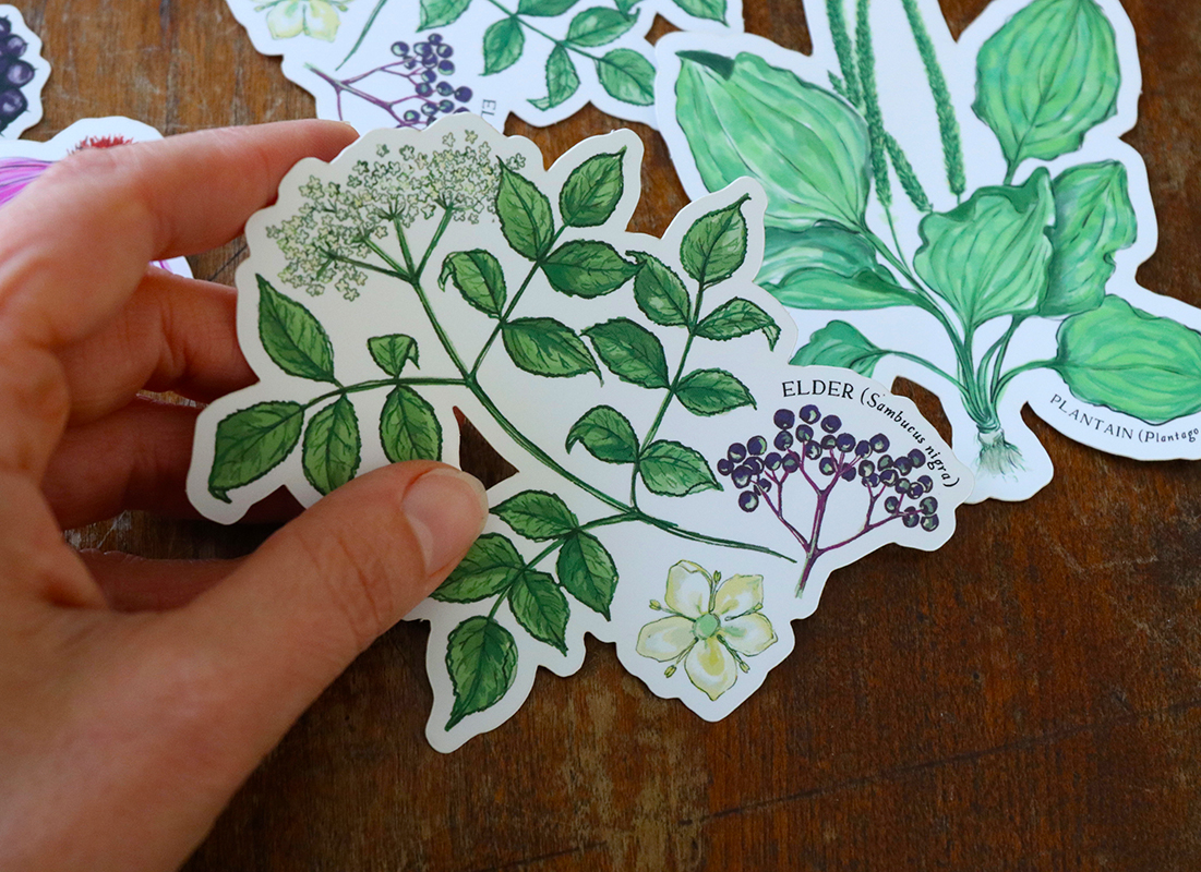 Herbal Sticker Sets by the Herbal Academy