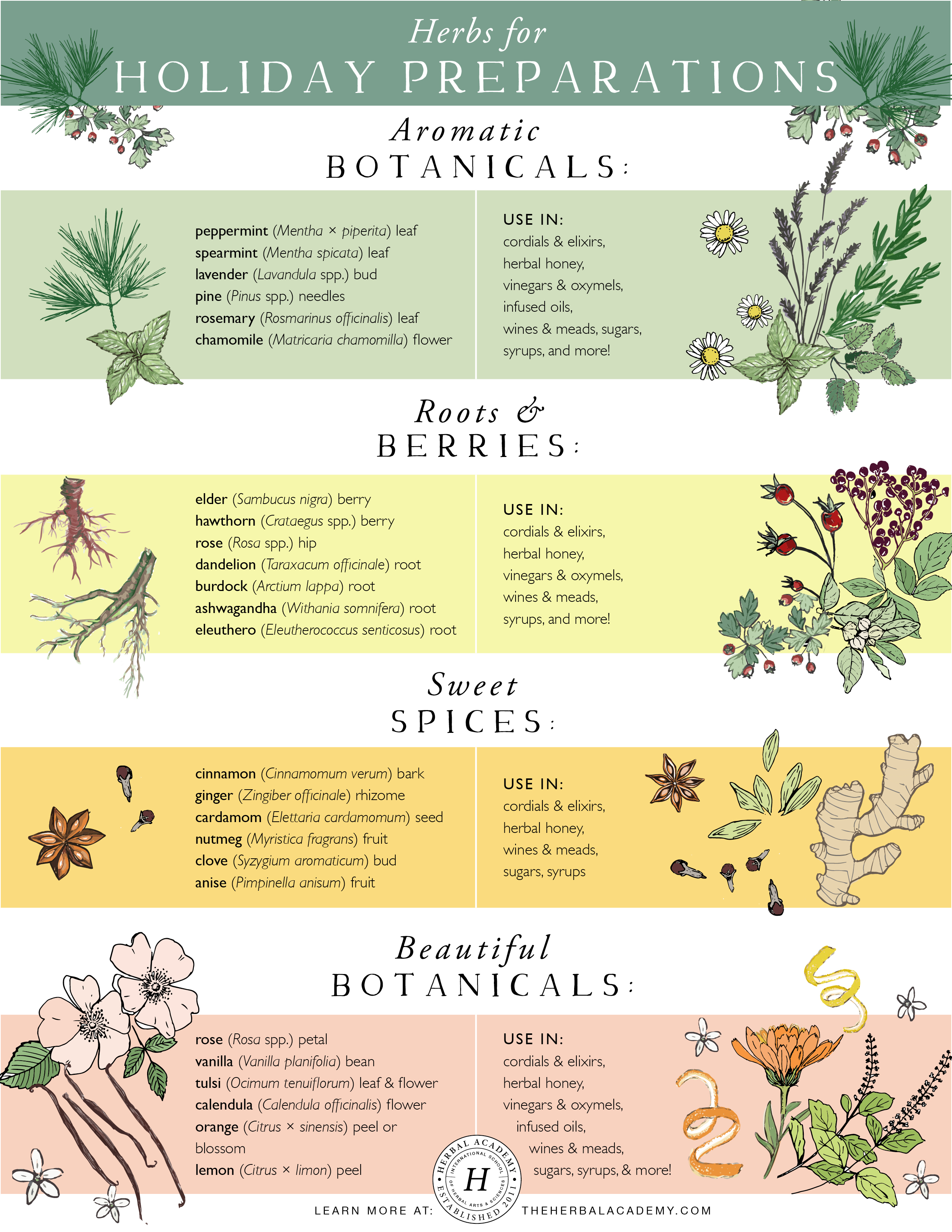 Herbs for Holiday Preparations | Herbal Academy | Here's a list of herbs that often make their way into lovely herbal holiday preparations that can, in turn, become beautiful gifts and accompaniments to long winter evenings by the fireside.