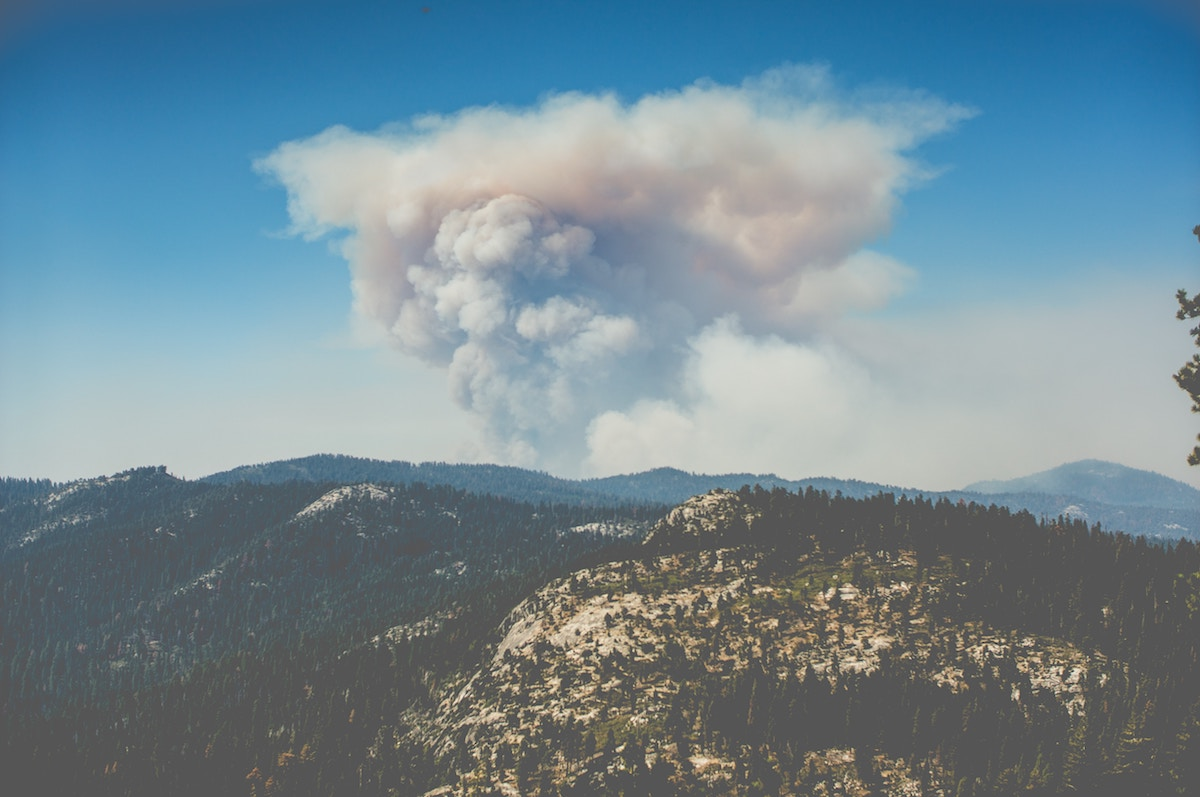 smoke hovering in air over forest