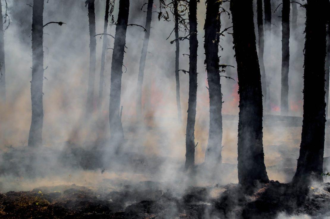 smoke and burnt trees
