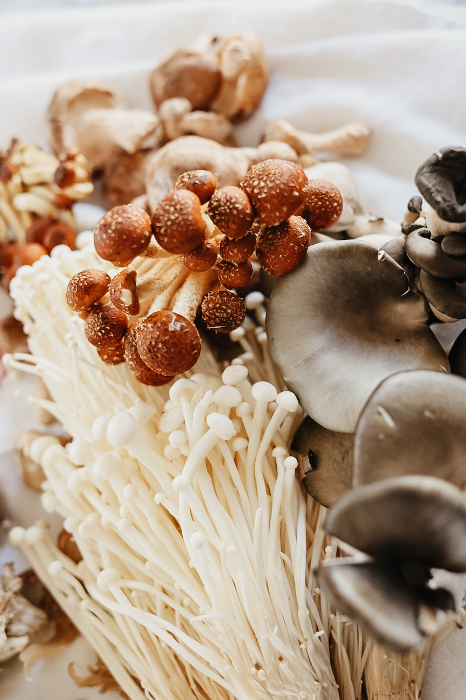 The Mushroom course - Ethics, Cautions, and Techniques of Mushroom Foraging; Common Wild Mushrooms; Mushroom Cultivation