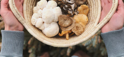 THE Mushroom Course - Herbal Academy - learn mushroom foraging and identification