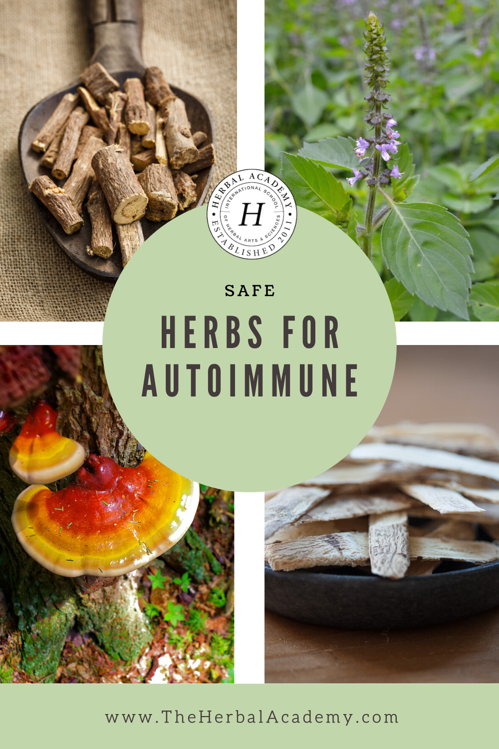 Safe Antiviral Herbs for Autoimmune Disease | Herbal Academy | Finding immune-supportive, antiviral herbs for autoimmune disease requires an extra layer of care and research by the individual or practitioner.