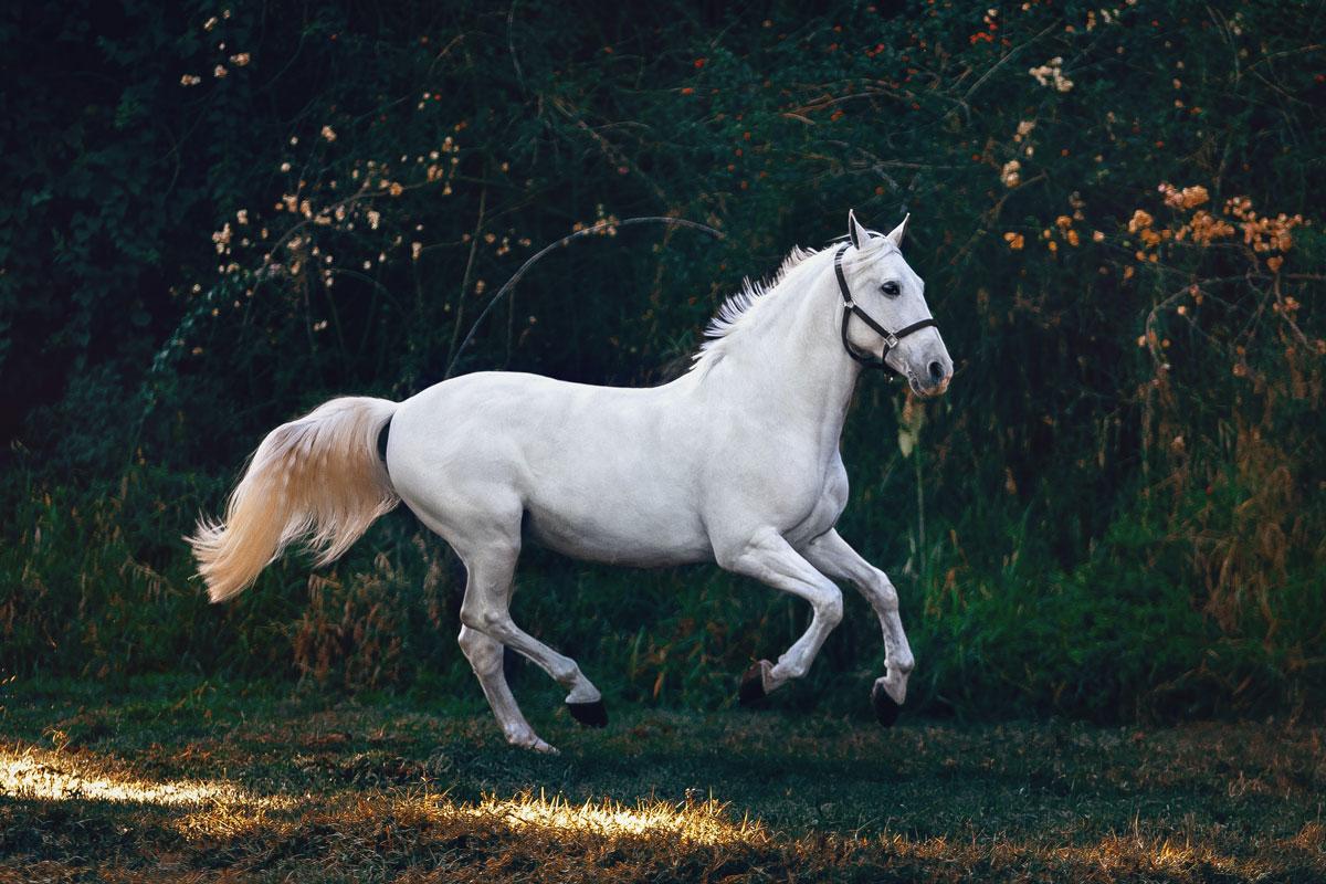 White Horse Running Through Field