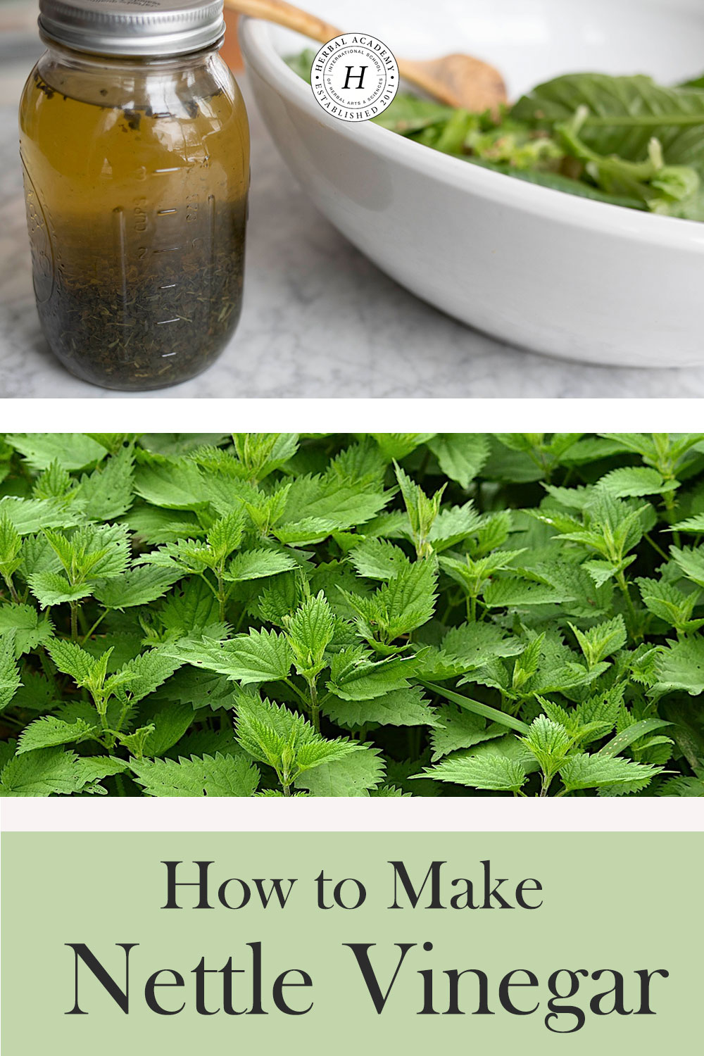 Nettle Vinegar: A Spring Alterative Recipe | Herbal Academy | Learn how to make delicious nettle vinegar using dried nettle and apple cider vinegar to support the liver and aid in gentle cleansing and detoxification.