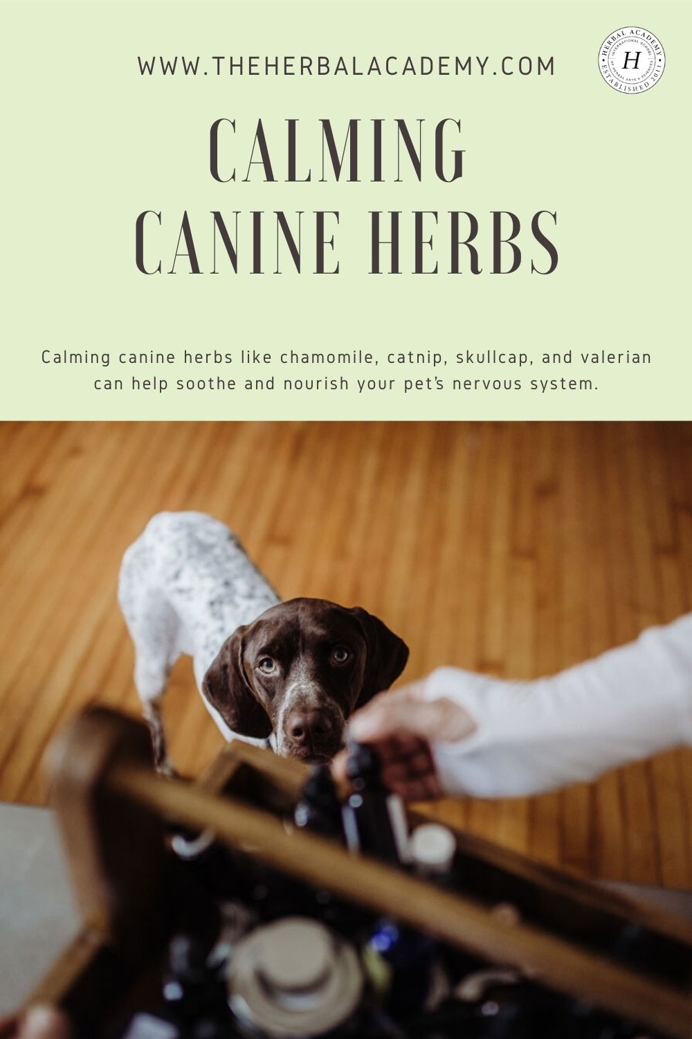 Calming Canine Herbs for Your Four-Legged Friends | The Herbal Academy | Calming canine herbs like chamomile, catnip, skullcap, and valerian can help soothe and nourish your pet's nervous system.