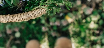 The Foraging Course by Herbal Academy - chickwead-and-violets