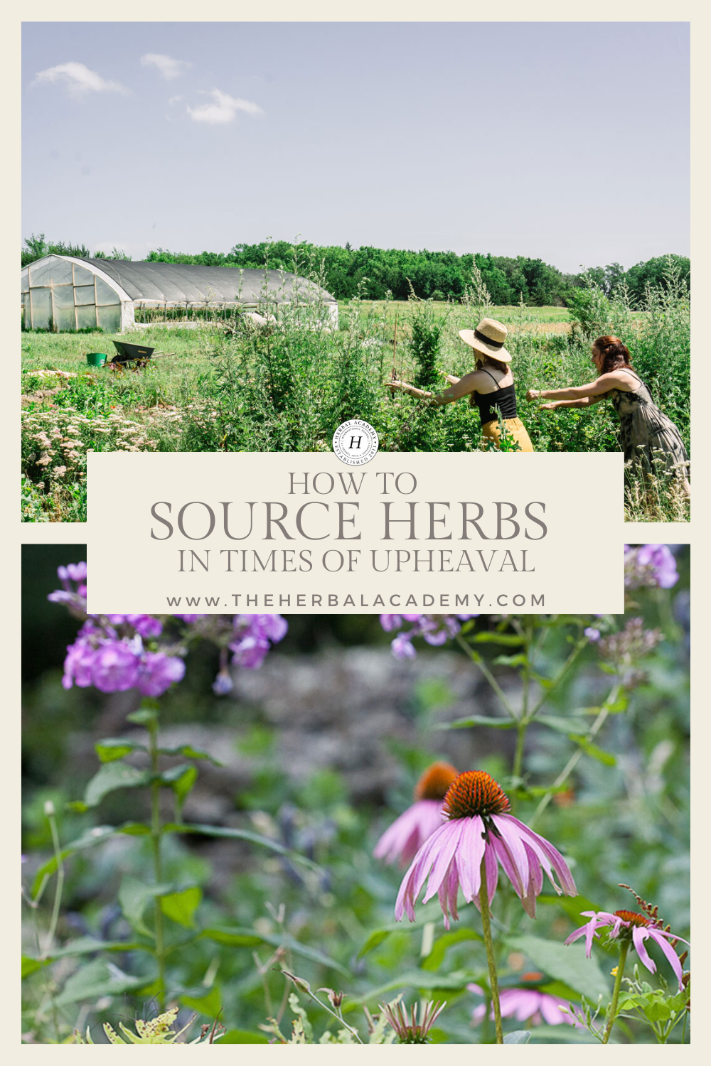 How and Where to Buy Herbs in Times of Upheaval | Herbal Academy | At the beginning of this current global pandemic, we collectively found ourselves wondering where to buy herbs during times of scarcity.