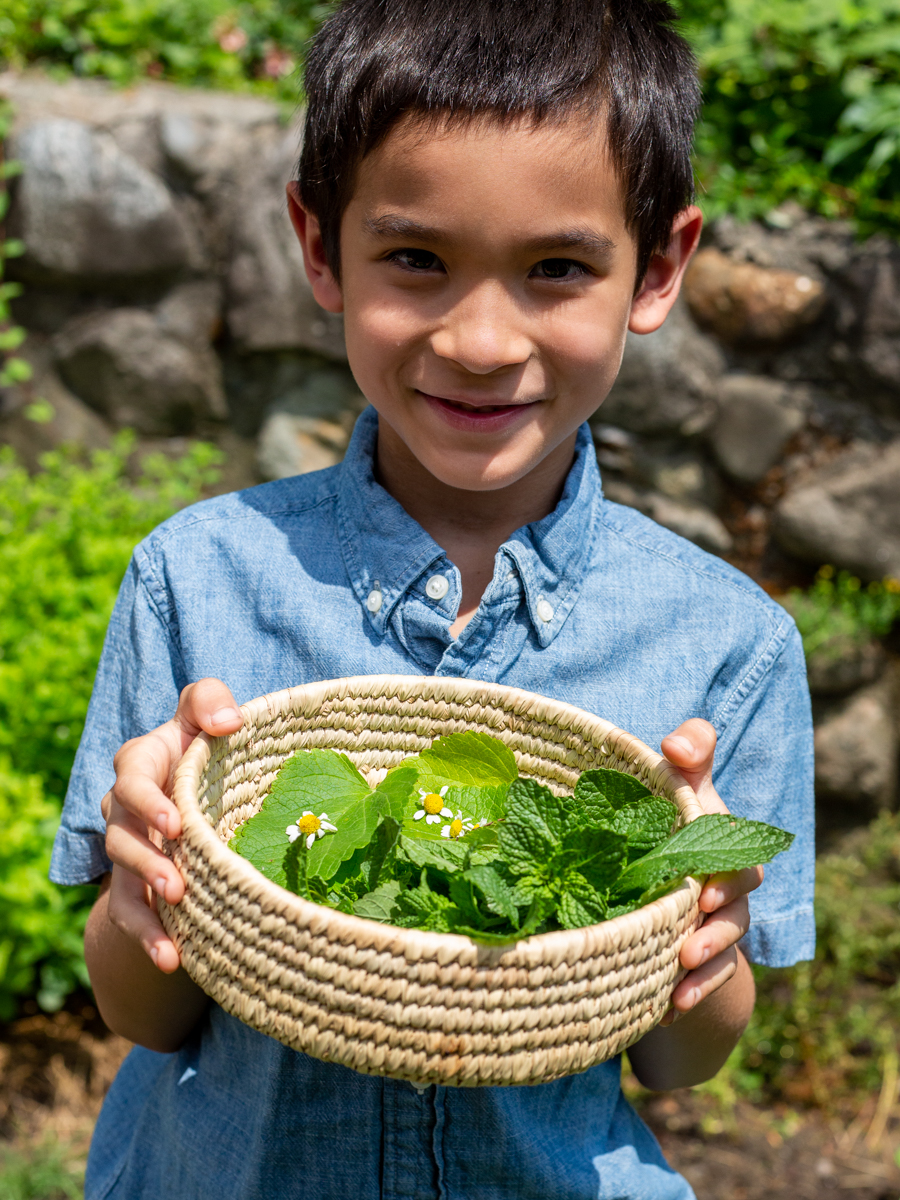 Online Nature Kids Camp Herbalism for Kids by the Herbal Academy plant discover