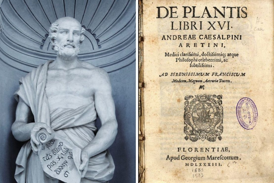 "Botany Beginnings: Who was Theophrastus? | Herbal Academy | Theophrastus is known as the ""father of botany"" because his descriptive writings helped create a new frontier in scientific botanical terminology."