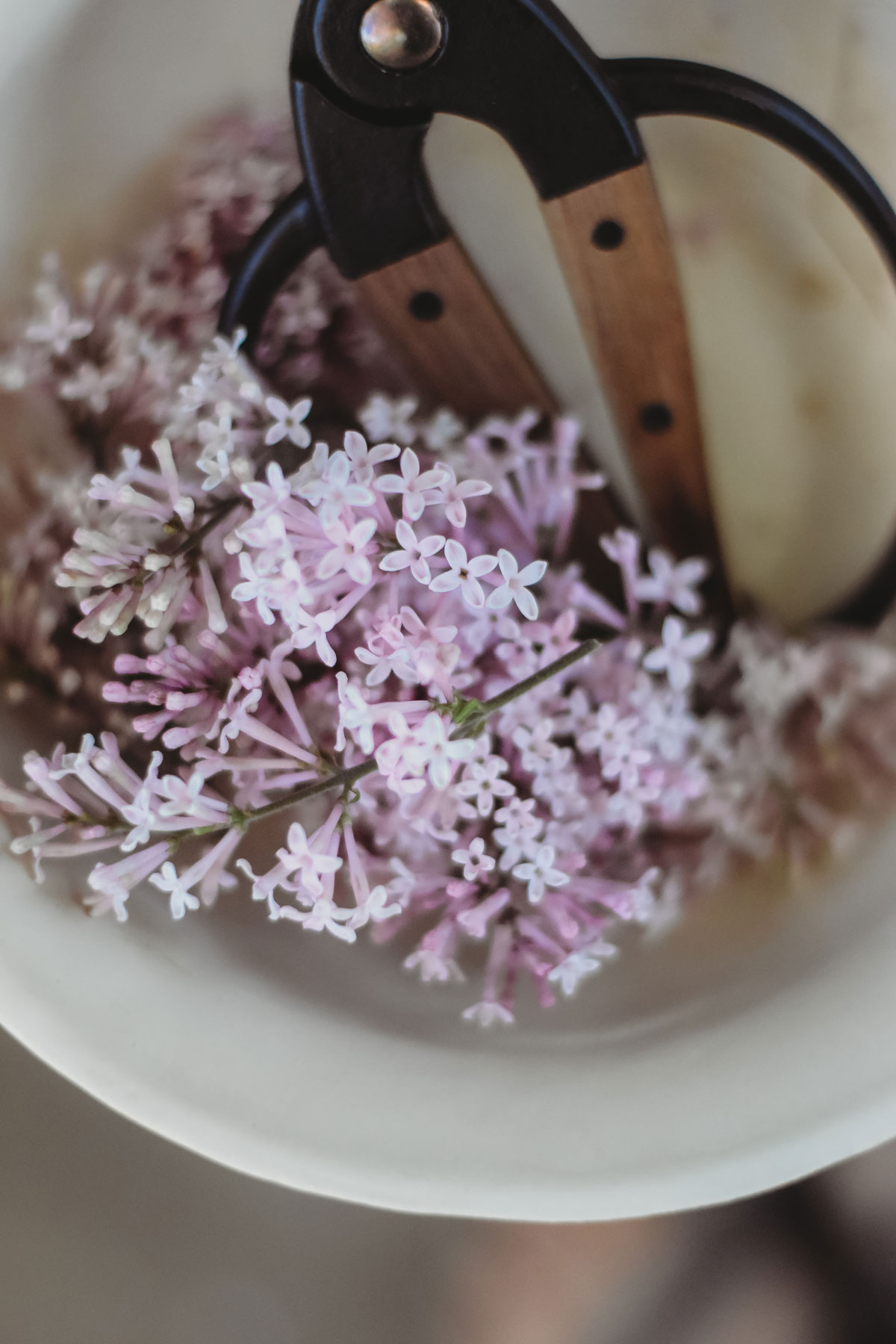 What is enfleurage? A bowl of lilac flowers with scissors