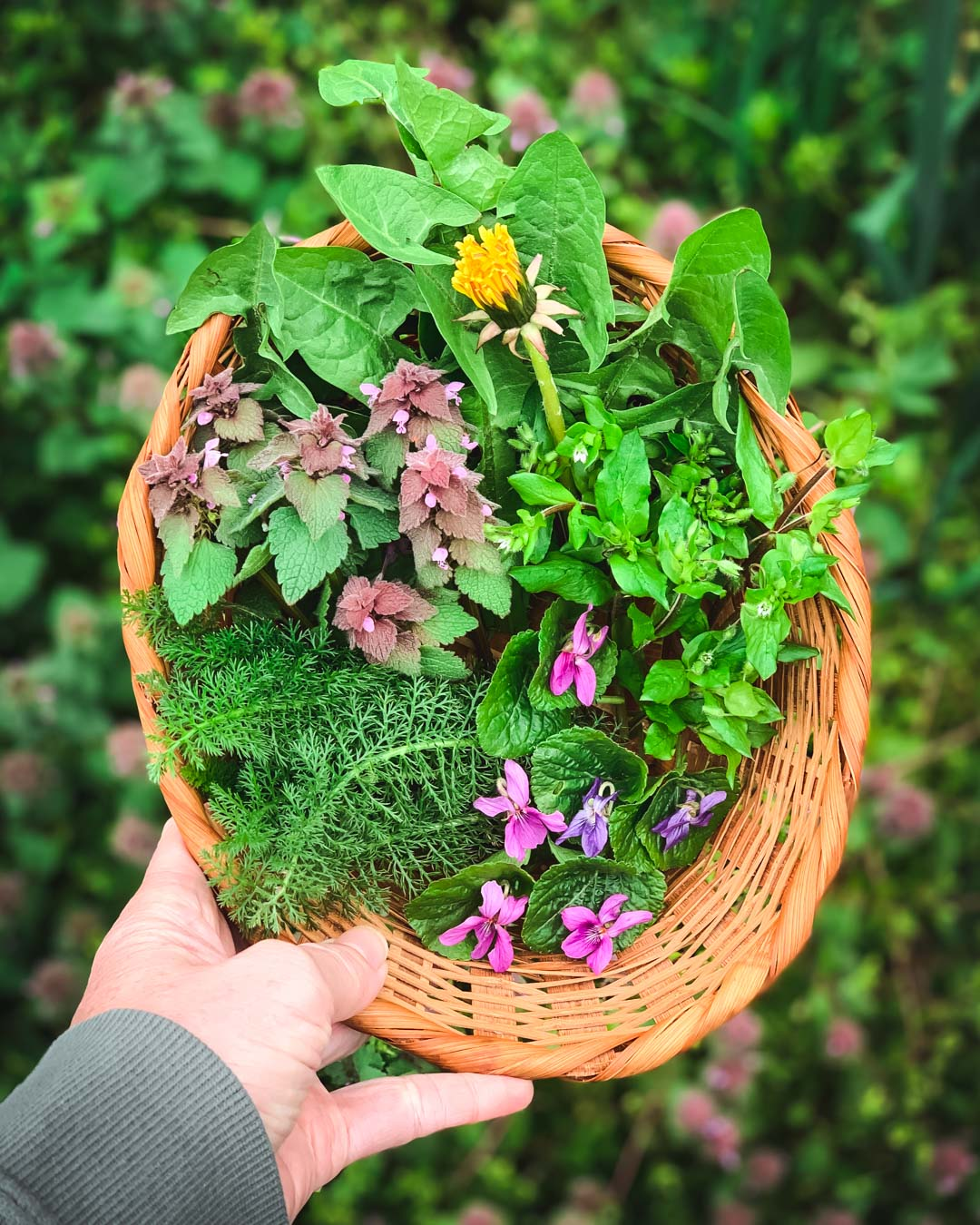 basket of foraged plants