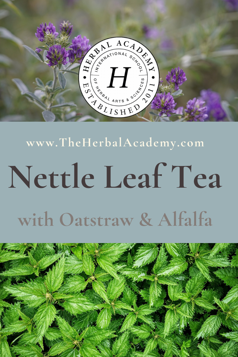 Nettle Leaf Nursing Tea Pinterest Graphic