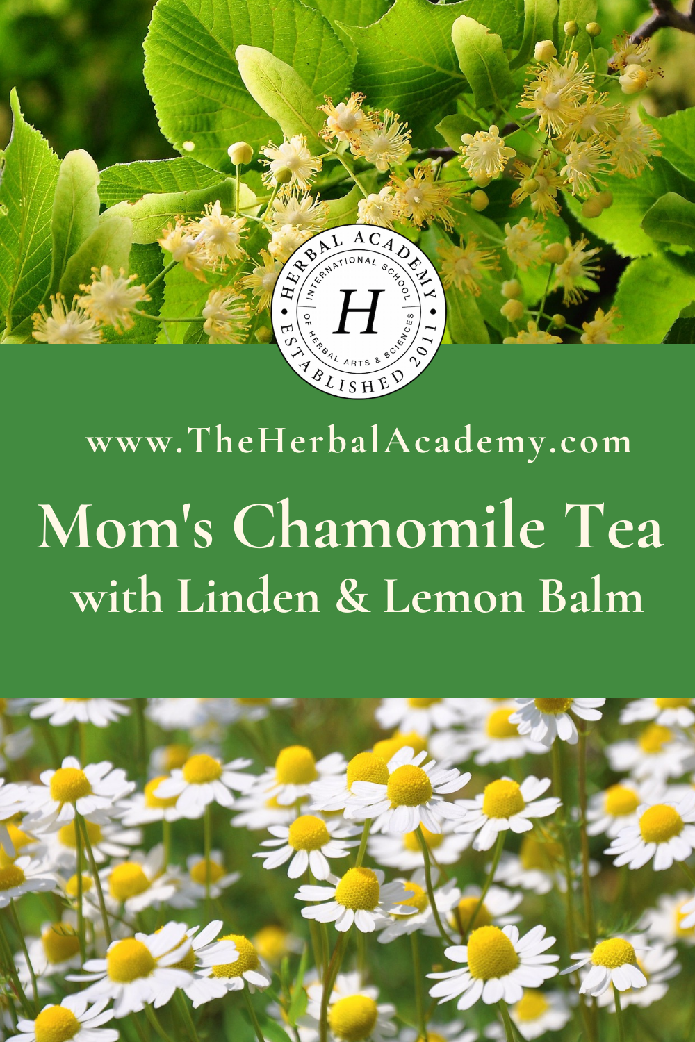 Mom's Chamomile Tea with Lemon Balm and Linden Flower | Herbal Academy | pintrest graphic