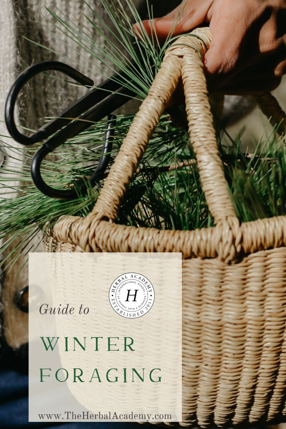 Your Guide to Winter Foraging Pinterest Graphic