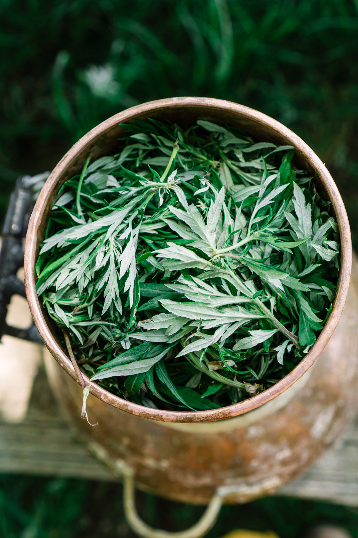 Learn how to use mugwort in a variety of ways.