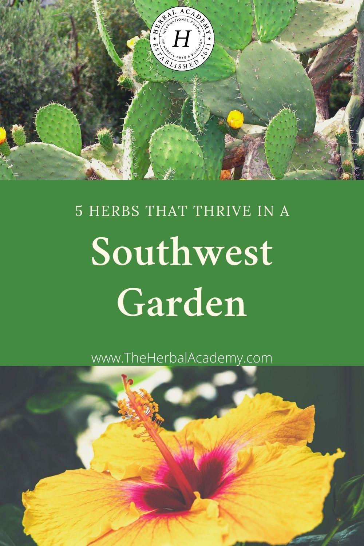 5 Herbs that Thrive in a Southwest Garden   Herbal Academy   Do you garden in the sunny Southwest? Here are five herbs that thrive in the summer heat of a Southwest garden.