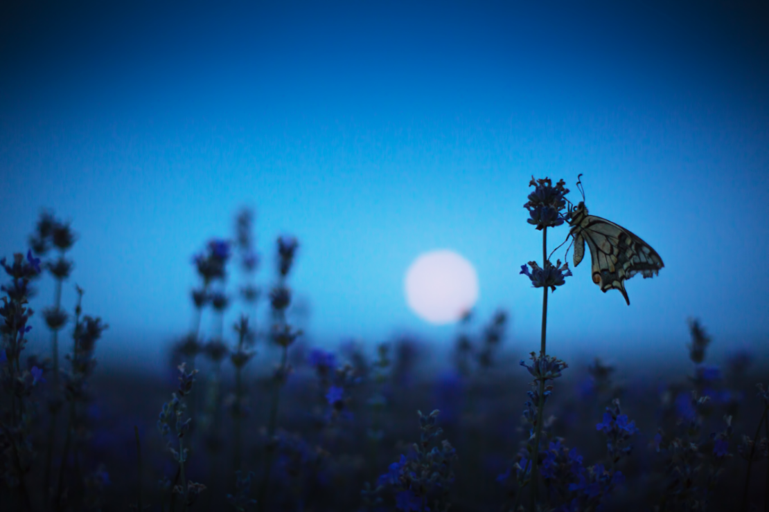 Mugwort Dream Pillow | Herbal Academy | butterfly by moonlight
