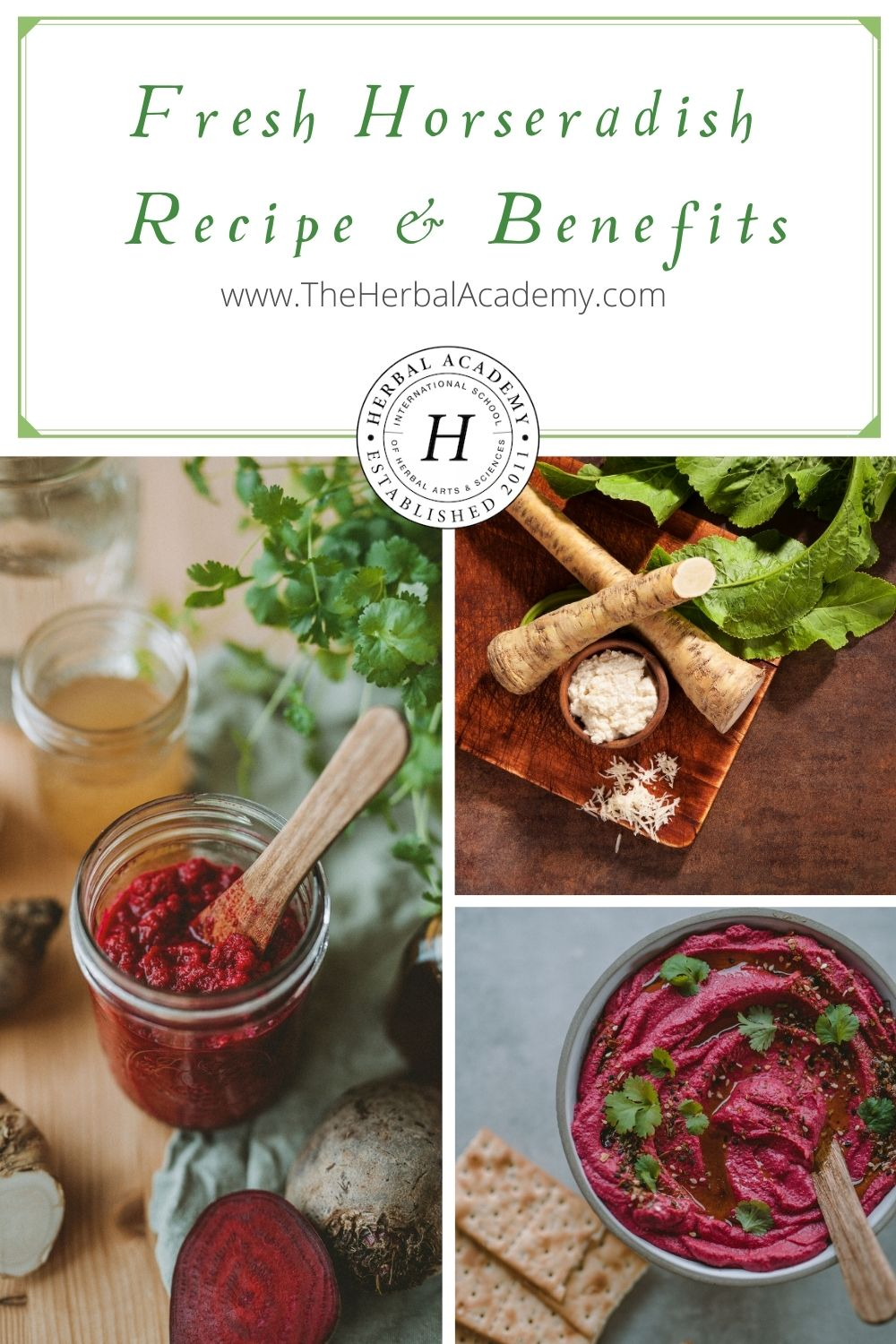 Winter Wellness: Fresh Horseradish Recipe & Benefits   Herbal Academy   This fresh horseradish recipe is a wonderful and simple condiment for winter wellness, especially in regards to sinus support!