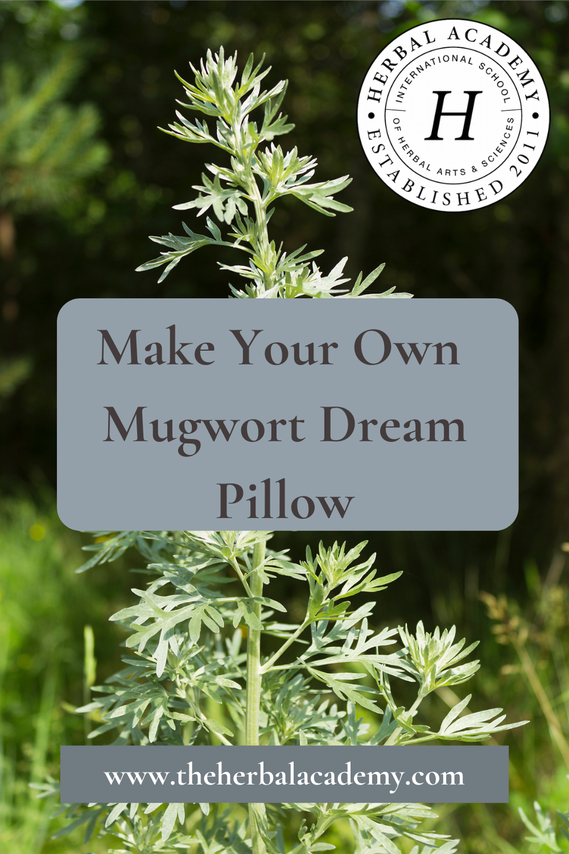 Mugwort Dream Pillow | Herbal Academy | Pintrest graphic