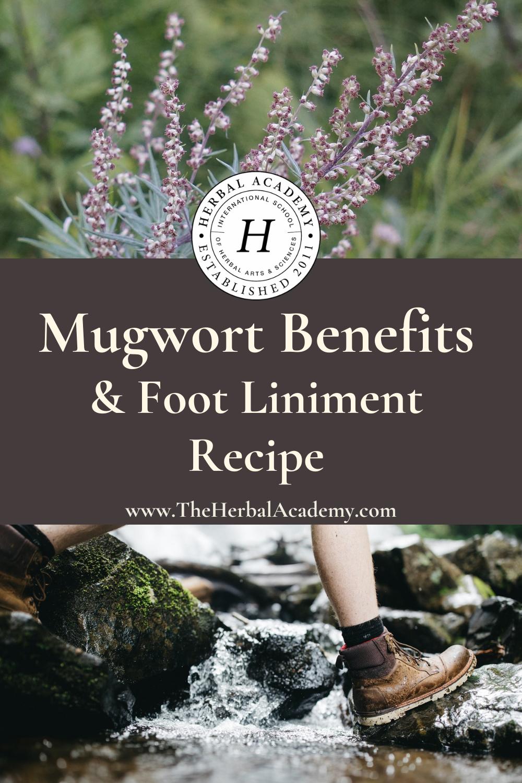 Mugwort Benefits & Foot Liniment | Herbal Academy | Pintrest Graphic