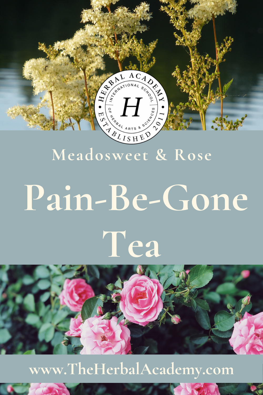Meadowsweet Tea with Rose | Herbal Academy | Pintrest Graphic