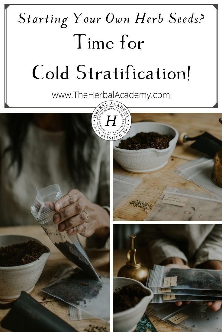 Cold stratification pinterest graphic