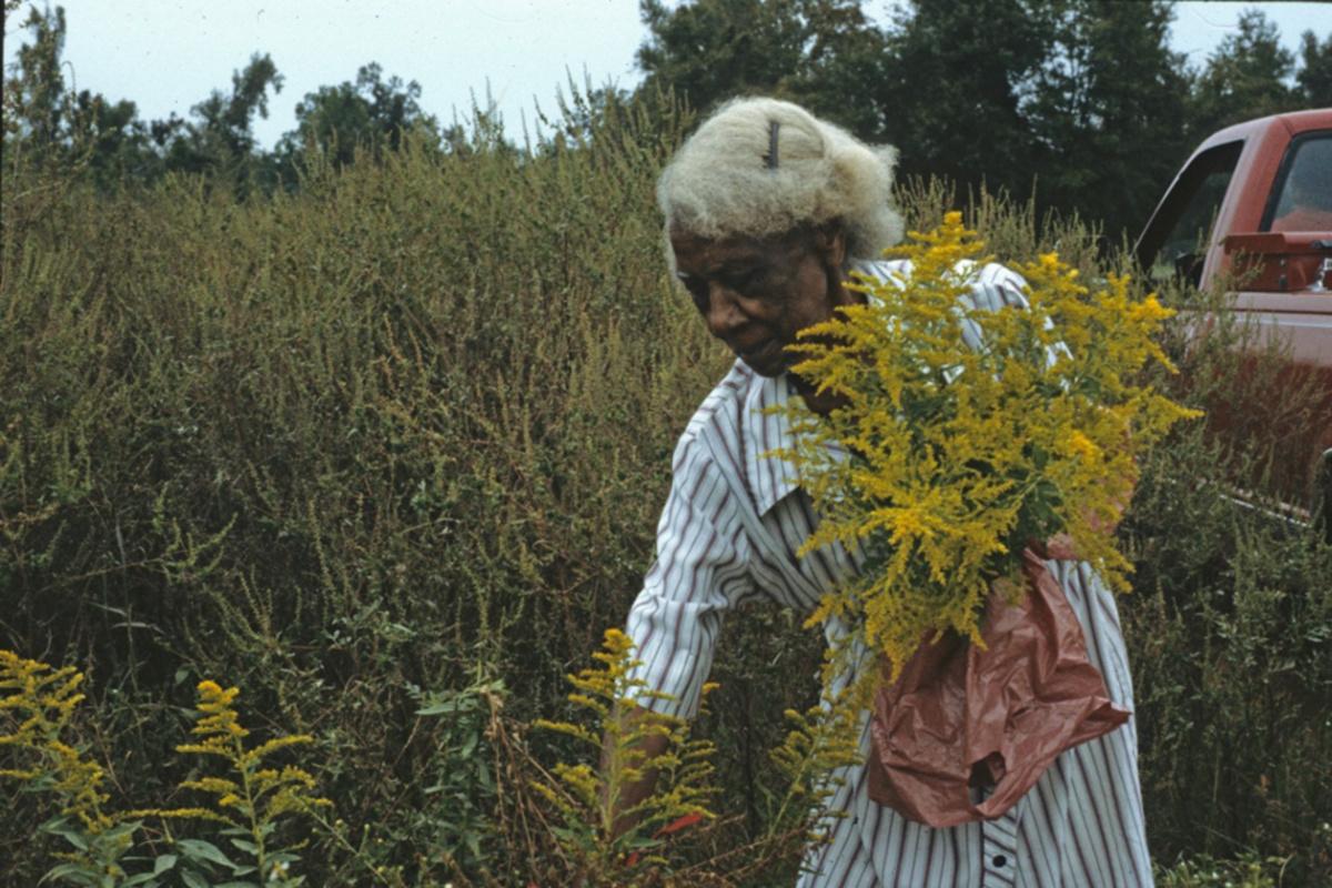 Emma Dupree gathering goldenrod