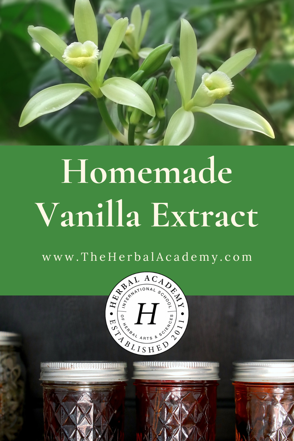 Homemade Vanilla Extract | Herbal Academy | Homemade vanilla extract adds its perfumed, complex flavor to hot and cold drinks, baked goods, confections, smoothies, yogurt, and more.