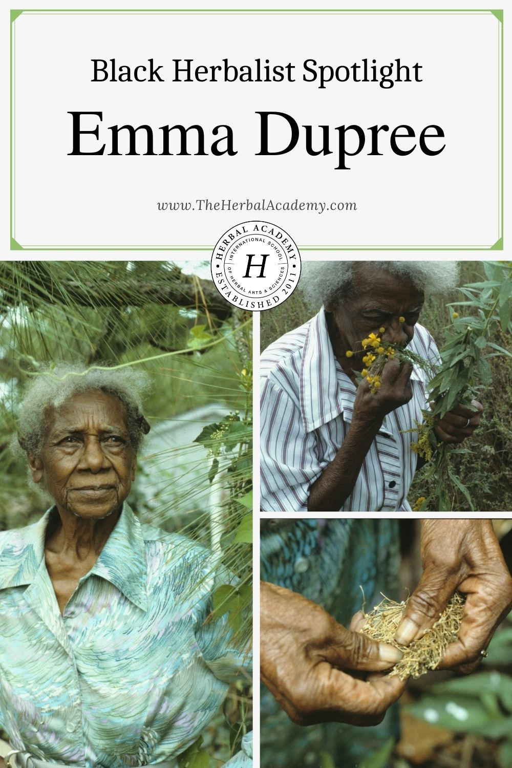 Black Herbalist Spotlight: Emma Dupree | Herbal Academy | Be inspired by the life of Emma Dupree, a Black herbalist whose work touched countless lives in her rural North Carolina community.