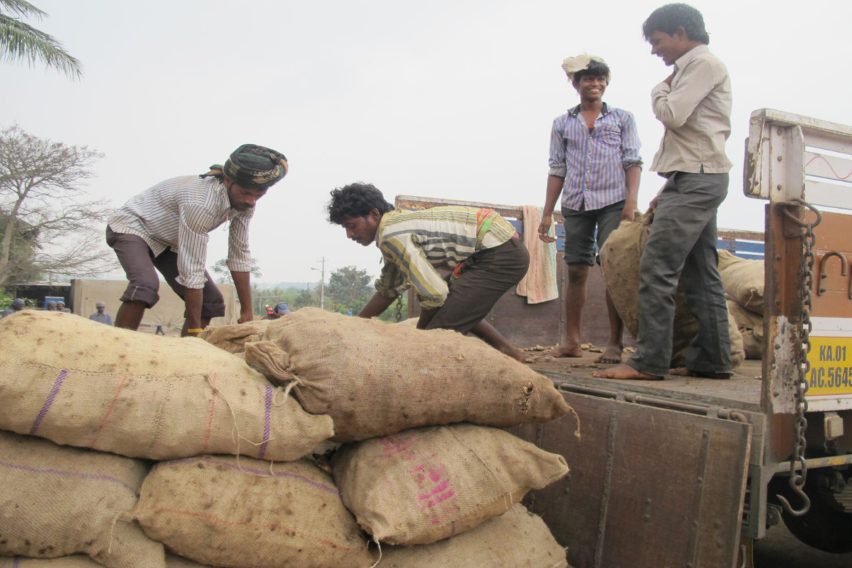 men loading bags of herbs onto a truck
