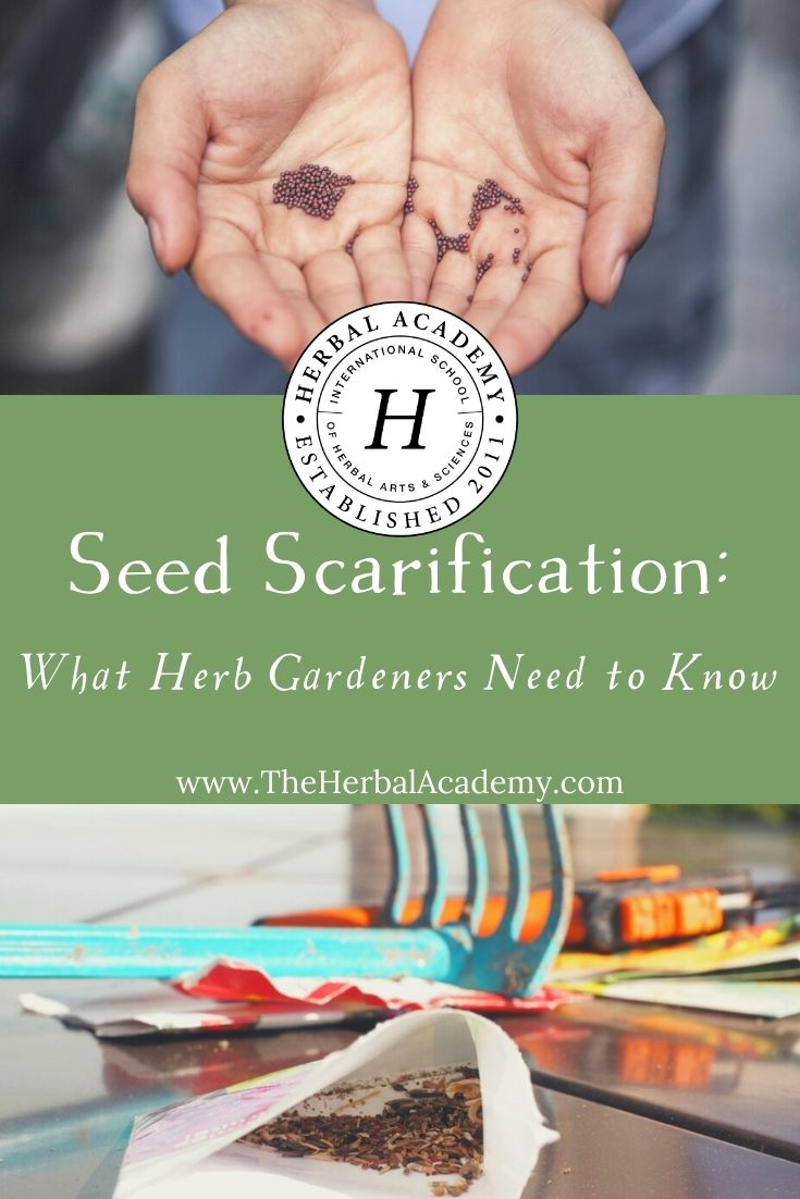 Seed Scarification: What Herb Gardeners Need to Know | Herbal Academy | Let's take a look at a few different methods of seed scarification to increase germination rates among seeds with tough outer shells.