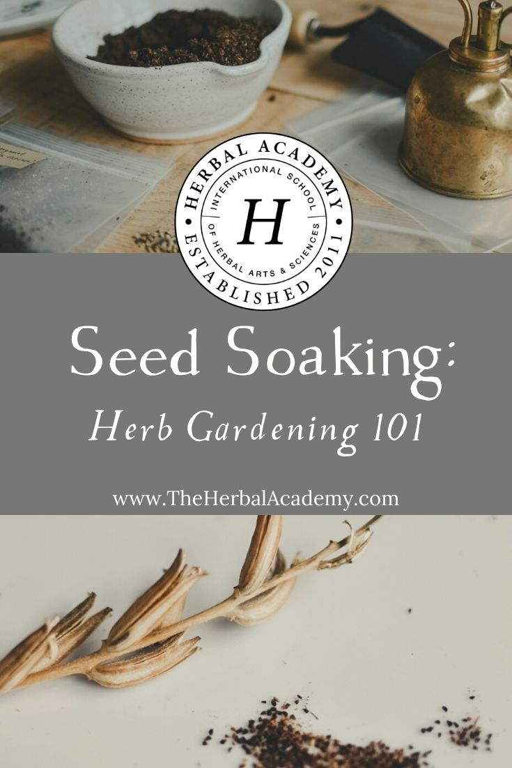 Seed Soaking: Herb Gardening 101 | Herbal Academy | Learn all about the method of seed soaking. This is a method of preparing seeds, specifically those with hard outer shells, for planting.