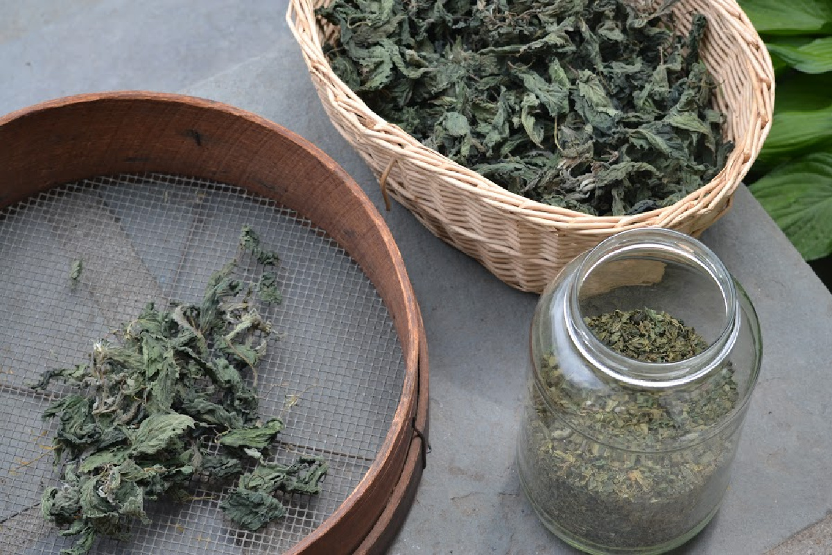 dried nettle on a screen, in a basket, and in a jar for nutrient deficiencies recipes