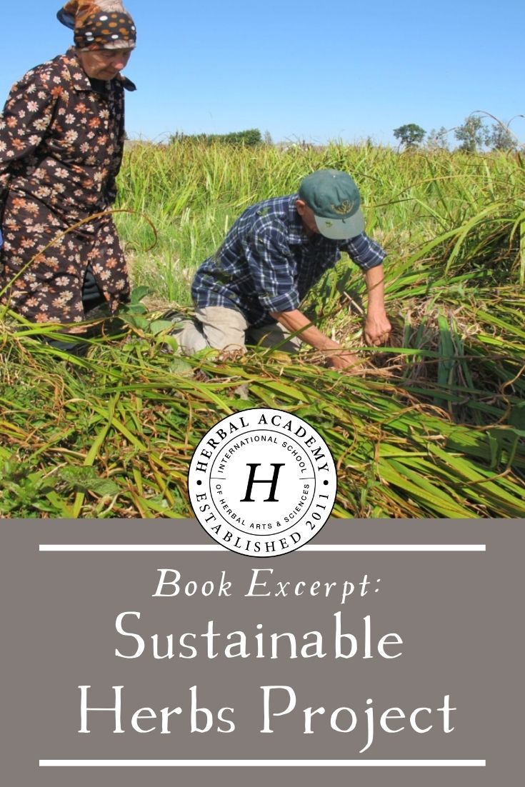 "Book Excerpt: Sustainable Herbs Project | Herbal Academy | Learn about the Sustainable Herbs Project in this excerpt from Ann Armbrecht's new book, ""The Business of Botanicals""."