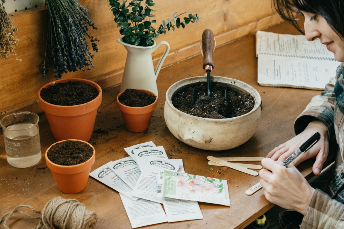 supplies to grow echinacea