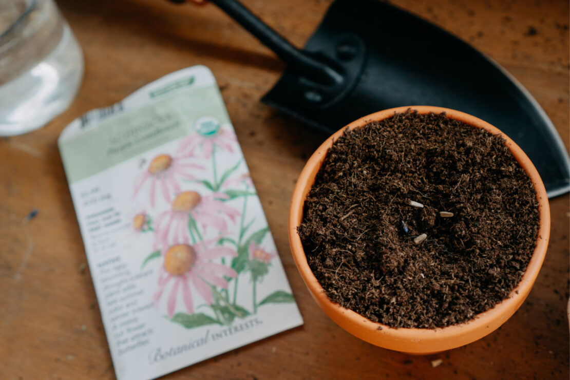 How to Grow Echinacea featured image