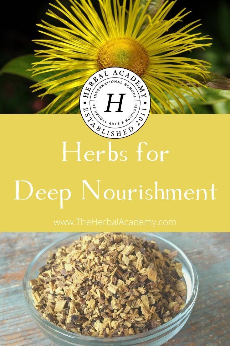 Hierbas para nutrición profunda | Academia de hierbas | Si estás buscando Para respaldar su bienestar, inmunidad y vitalidad en general, considere explorar estas hierbas nutritivas para su cuerpo.