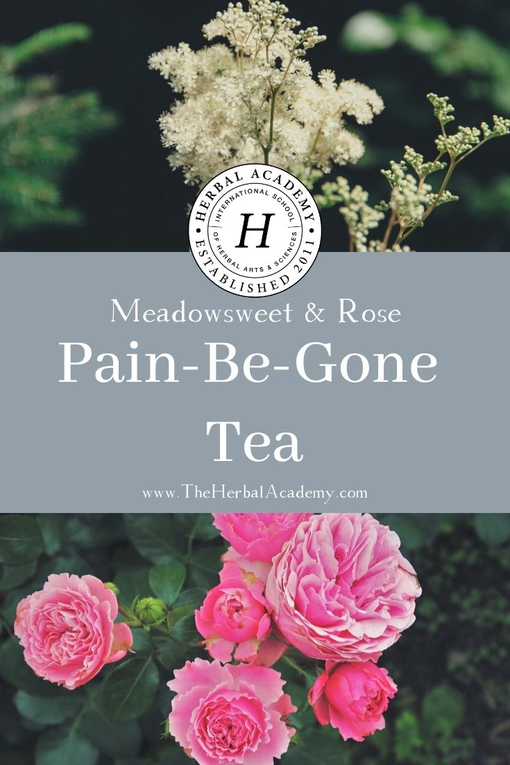 Meadowsweet Tea With Rose   Herbal Academy   This meadowsweet tea recipe offers a chance to calm the mind and gently soothe aches and pains while hydrating the body.