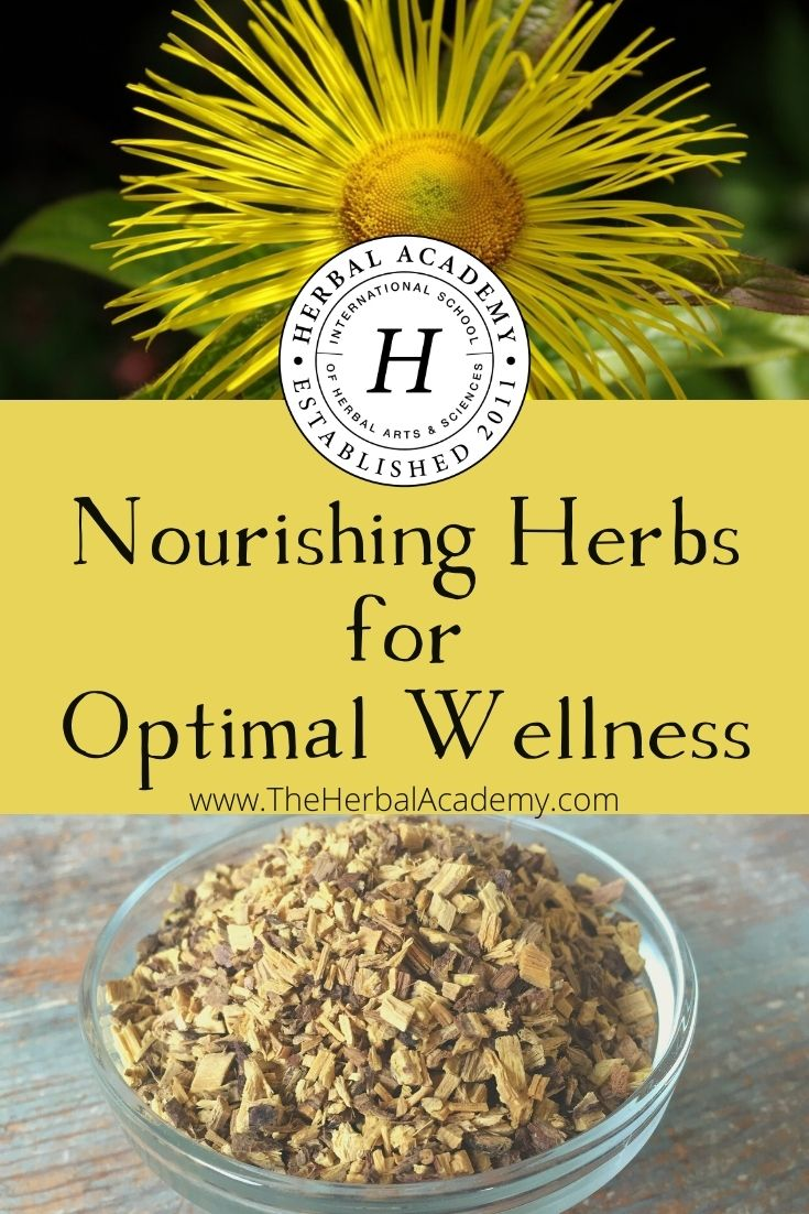 Nourishing Herbs for Optimal Wellness | Herbal Academy | If you are looking to support your overall wellness, immunity, and vitality, consider exploring these nourishing herbs for your body.