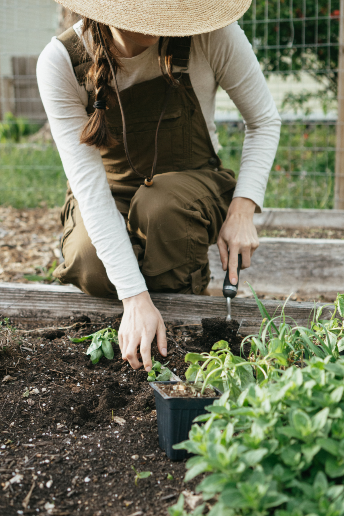planting herbs in a raised bed